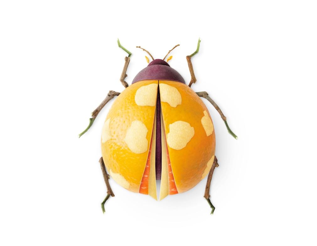 Doi Kham bug